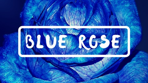 Blue Rose: A Touching Story of Kindness and Joy