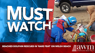 Beached dolphin rescued in 'rare feat' on Welsh beach - Video