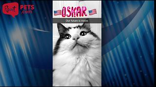 When cats make fun of the Presidential Elections, everyone wins