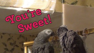 Einstein the Parrot is smitten with himself
