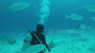 Huge hammerhead shark 'dances' with diver - Video