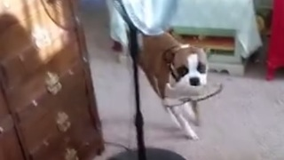 Clever dog brings owners their shoes