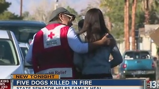 State senator helps family after dogs die in fire - Video