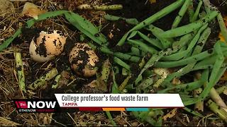 College professor's food waste farm in Tampa - Video