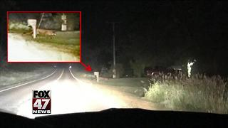 DNR confirms cougar sighting in Clinton County - Video