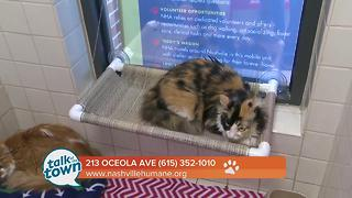 Nashville Humane Association Pet of the Week 6-23-17 - Video