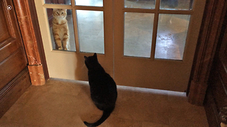 Growling Cat vs Pawing Cat - Video