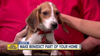 Jan. 6 Rescues in Action: Benedict needs forever home - Video