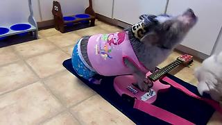 Pig in pajamas plays the guitar - Video
