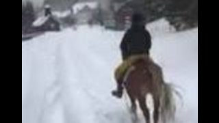 Skier Uses Horse Power After Austrian Roads Closed to Cars