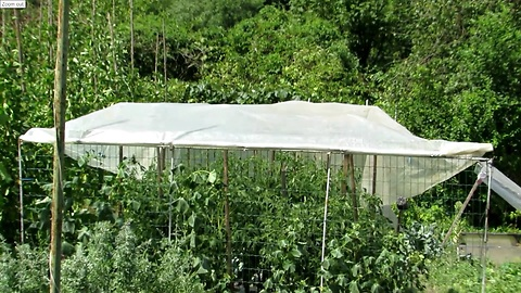 Simple tomato roof - DIY