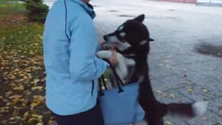 Dog's adorable reaction to seeing owner at the bus stop