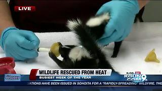 Tucson Wildlife Center needs crates to hold more injured animals - Video