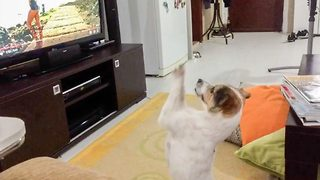 Des-Paw-Cito! Dog hates his owner turning off his favourite song - Video