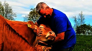 Farmer asks neighbor to babysit cows, so he takes it to the extreme