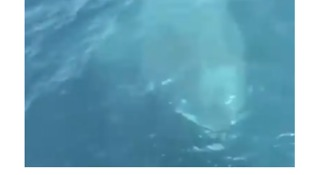 Shark Appears Next to Coast Guard Boat Off Maine - Video