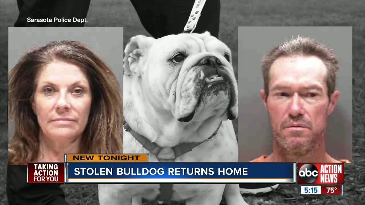 Bulldog returns home after being stolen