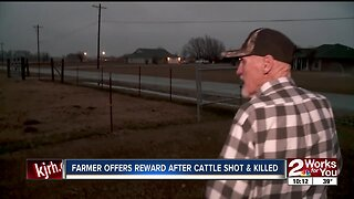 Farmer offers reward after cattle shot and killed
