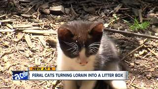 Lorain is a litter box for 9,000 feral cats