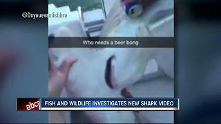 FWC investigating second shark abuse video that shows beer getting poured into hammerhead's gills - Video