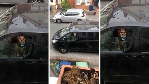 Homeowner left concerned after she catches dog staring at her from a van