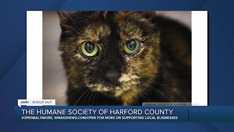 Callie the cat is up for adoption at the Humane Society of Harford County