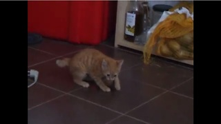 A Kitten Has Her Mind BLOWN By An Ordinary Everyday Food. - Video