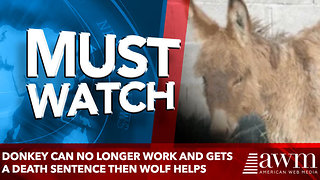 Donkey can no longer work and gets a death sentence - Video