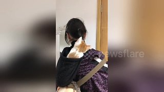 Confused kitten fights with girl's ponytail
