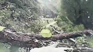 Trees Crash Across West Virginia Road, Narrowly Missing Driver - Video
