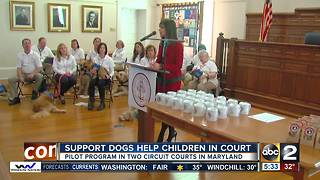Emotional support dogs help children in court - Video