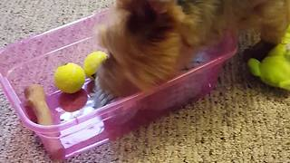 Happy dog takes new toys out of the box - Video