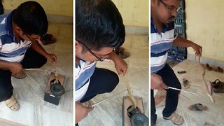 Shocking moment 2.5 ft cobra is rescued from soundbox