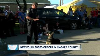 New K-9 Officer - Video