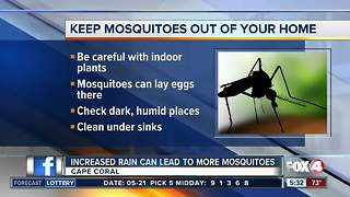 Protecting your home from mosquitoes after rain
