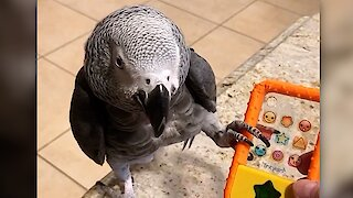 Einstein the talking parrot gets very annoyed with telemarketers
