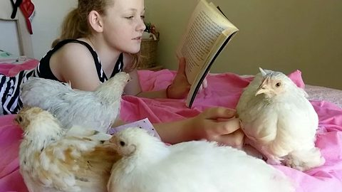 'Autism is my superpower': Reading to therapy chickens helps autistic 11yo build confidence and develop social skills