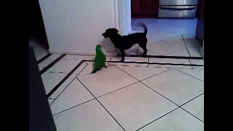 Dog loves to play with parrot best friend