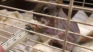 Newborn squirrel rescued from certain death