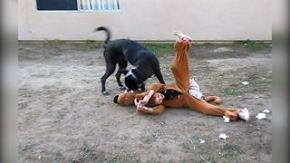 Cute Dog vs Scooby Doo