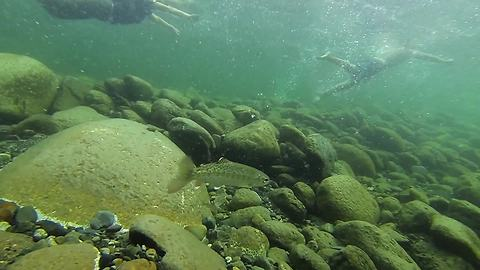 GoPro cam swept away in river captures beautiful footage