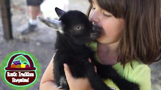 Baby Goats Playing in their pen for the FIRST time!!!