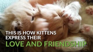 These clips of our cutest kittens will brighten your day! - Video
