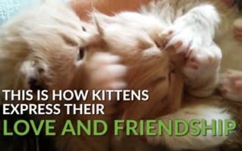These clips of our cutest kittens will brighten your day!