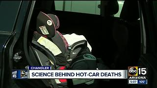 Psychologist weighs in on how parents could forget a child inside a car - Video