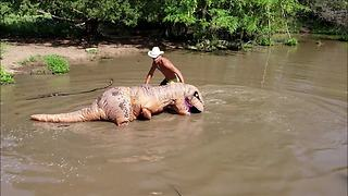 Man in T-Rex costume helps catch massive catfish - Video