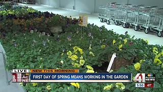 First day of spring and working in the garden - Video