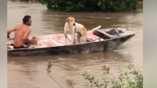 Ingham Dogs Must Take Boat to do 'Business' Amid Floodwaters - Video