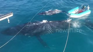 Incredible close encounter with whales off Queensland, Australia