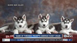 Popular Game of Thrones show inspires Husky craze - Video